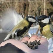 25 ноября стартовала акция «Помоги зимующим птицам»