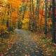 """Урок ритмики """"Осенний лес"""""""