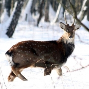 Экологическая неделя «Животные Дальнего Востока»