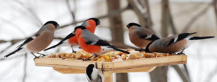 Мастер - класс по изготовлению кормушки для птиц