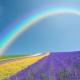 «Путешествие по цветным дорожкам»