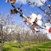«В поисках Весны»
