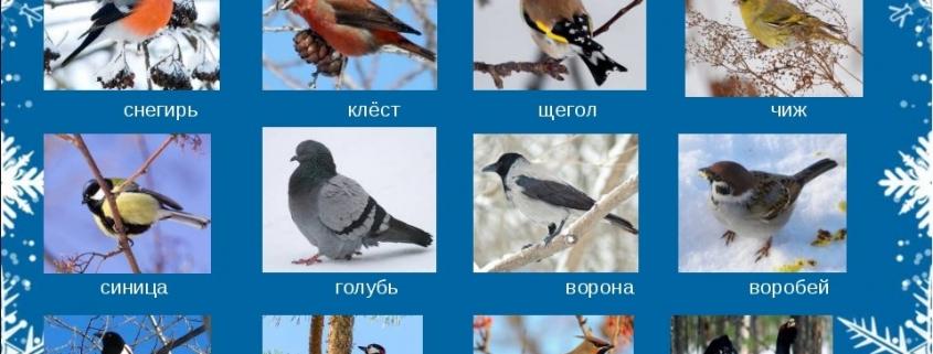 """""""Помоги зимующим птицам"""""""