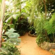 Эколого-познавательные экскурсии в Ботанический сад
