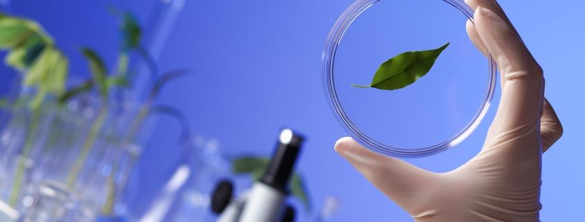 Повышение интереса к изучению предмета биологии через внедрение инновационных технологий
