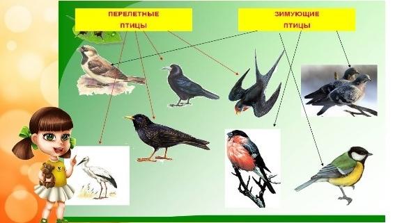 Перелетные и зимующие птицы